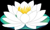 lotus-web Građevinski radovi i usluge, Zadar